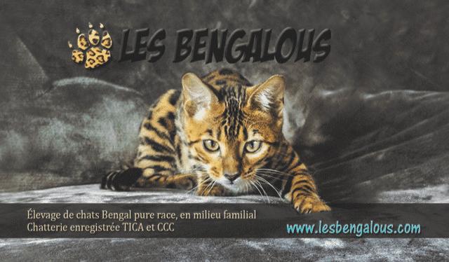 Les Bengalous