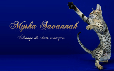 Myska Savannah