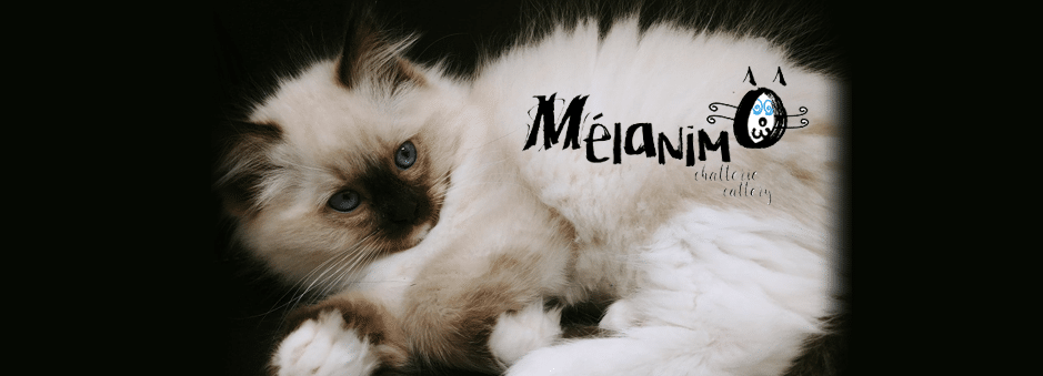 Melanimo