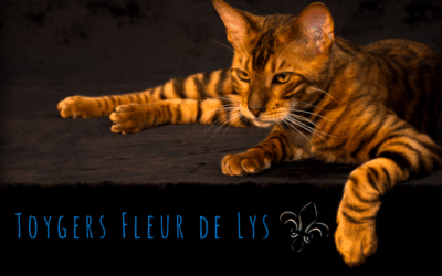 Toygers Fleur de Lys