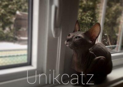 Unikcatz 2