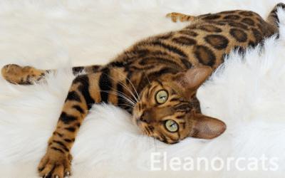 EleanorCats