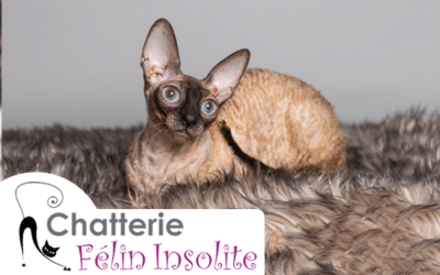 Chatterie Félin Insolite