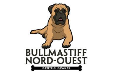 Bullmastif Nord-Ouest