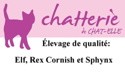 Chat-Elle cattery