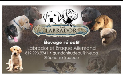 Ferme Labrador