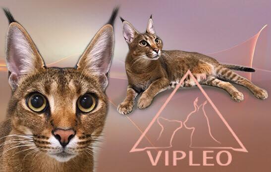 VIPLEO®