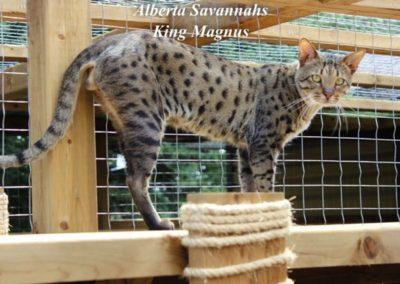 Alberta Savannah's (1)