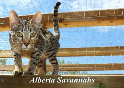 Alberta Savannah's (5)