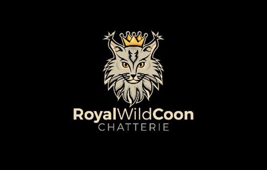 Royal Wild Coon
