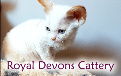 Royal Devons cattery