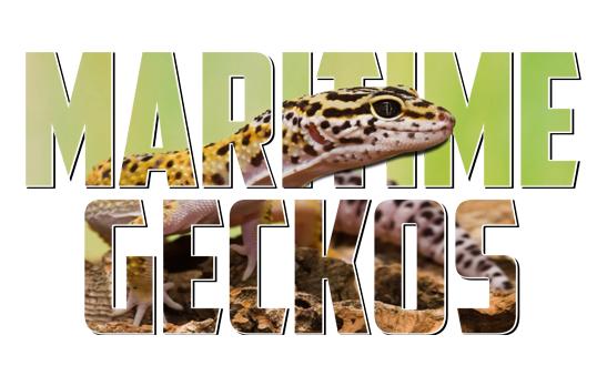 Maritime Geckos