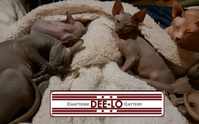 DEE-LO Cattery