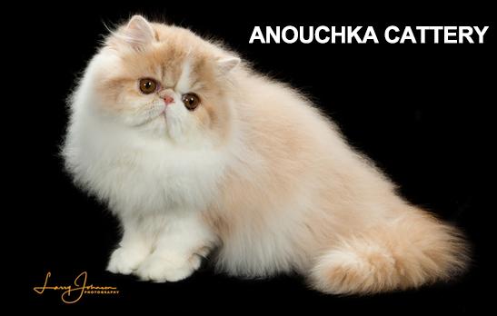 Anouchka Cattery